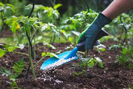 CORE COMPETENCY 3: CARE AND MAINTAIN CROPS